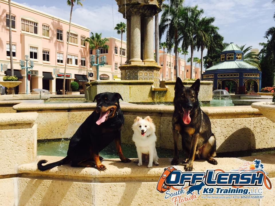 Free Basic Obedience Package From Off Leash K9 Training